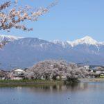 信州松本 千鹿頭池で撮影した野鳥を紹介します