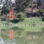 信州松本 千鹿頭池で撮影した野鳥などの生き物達