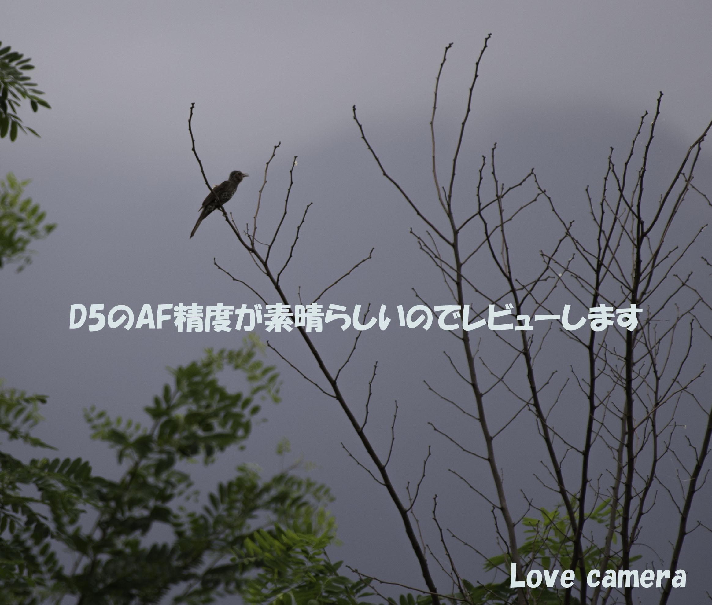ニコン D5で初めて野鳥を撮影しました。AF性能についてレビューします