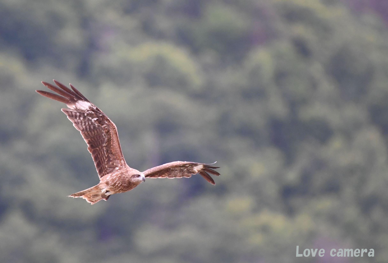 野鳥の飛翔シーンを上手く撮る為の練習方法について考えます
