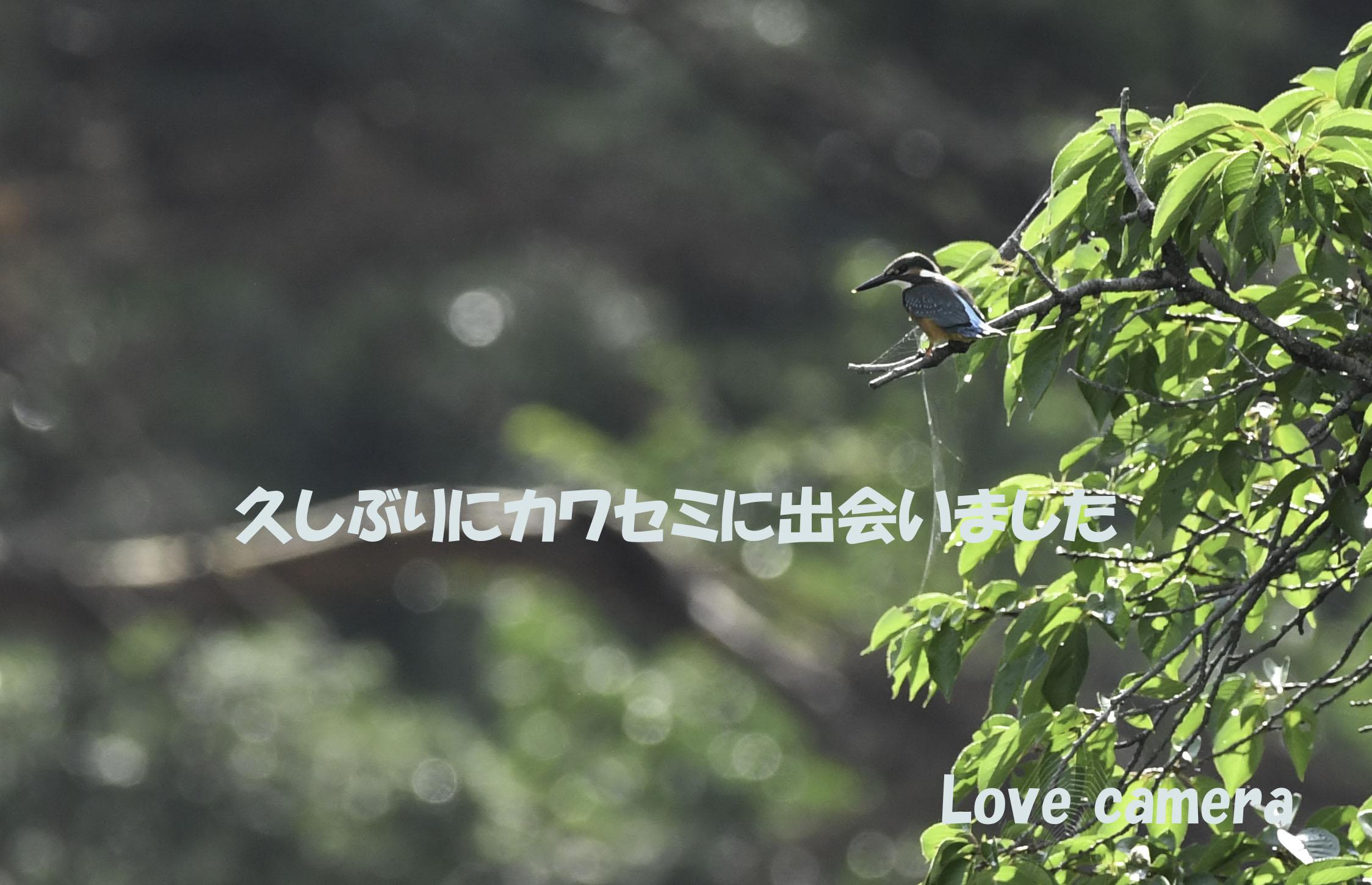 信州松本で久しぶりにカワセミを撮影しました 撮影時の詳細等について