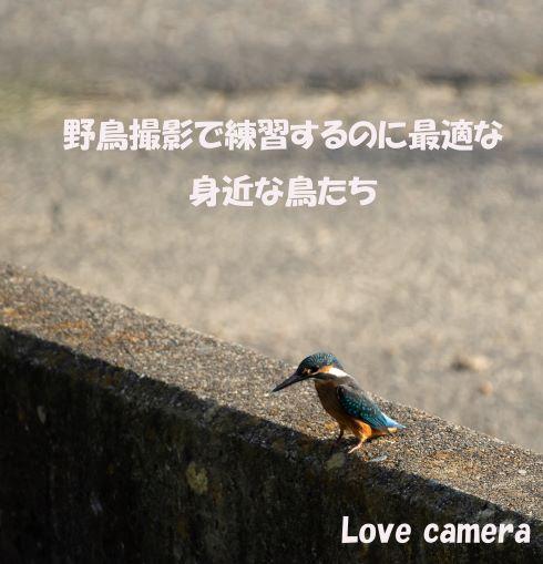 野鳥撮影で練習するのに最適な身近な3種の鳥を紹介します