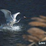 野鳥の飛翔シーンを撮影するのに必要なカメラの性能とおすすめのカメラ