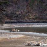 2020年撮り初め カワセミ撮影に出掛けたら凍結していたので季節毎の千鹿頭池を紹介します