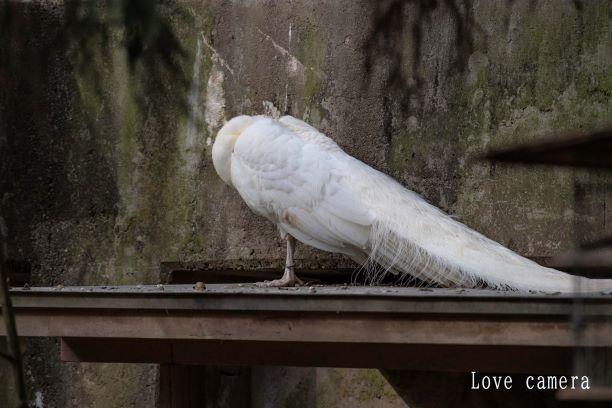 松本 アルプス公園の「小鳥と小動物の森」で見られる動物達を紹介します
