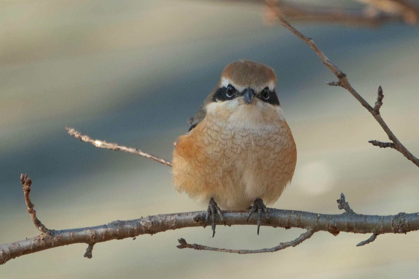松本 アルプス公園で野鳥を撮影。野鳥の写真と駐車場の情報について
